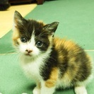 生後1ヶ月くらいのメス2匹です。(2匹とも新しい家族が決まりました) − 山形県