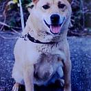 愛犬と飼い主さんの為のドッグトレーニングの画像