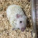 小動物専門のペット用品の販売・通販の展開中❗️増え過ぎた小動物の里...