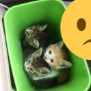 捨て猫です。