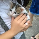 2ヶ月ぐらいの子猫です