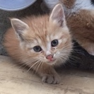 捨て猫の子猫の里親を探してます。