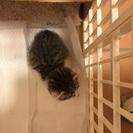 生後2カ月くらいの子猫です
