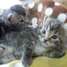 FairyTamaの第一回猫イベント! 続
