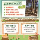 大牟田市の伐採屋 大牟田伐採です!