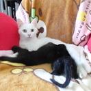 子猫(クロネコ)二匹
