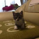 子猫のトラちゃん