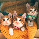 チャ白3兄弟