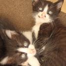 【交渉中】子猫4匹 生後一か月ほど
