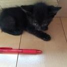 一か月の黒子猫2匹