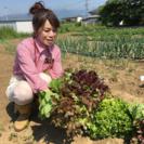 野菜の収穫体験しませんか?の画像