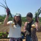 野菜の収穫体験しませんか? - 笛吹市