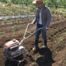 野菜の収穫体験しませんか? − 山梨県