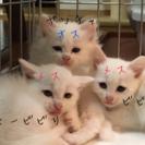真っ白美猫3匹。オス1匹、メス2匹