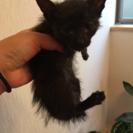 黒ネコの赤ちゃん