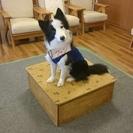 愛犬向け しつけ方教室を開催中!
