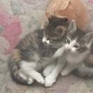 【里親決定しました】子猫3匹の里親さん募集