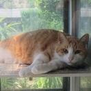 シェアハウスで保護猫のお世話をしませんか?