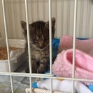 生後1ヶ月の保護猫です