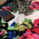 生後約1ヶ月の子猫6匹