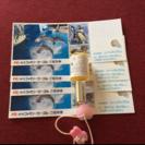 4枚セット‼️9月末まで‼️新江ノ島水族館