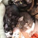 生後2か月の子猫の里親募集 ※現在、雄雌確認中です。