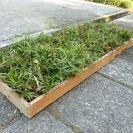 竜のひげ(1メートル×30センチの箱)