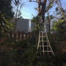 庭の手入れ 高木伐採致します。所沢市
