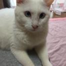 真っ白なかわいいネコちゃんです♡