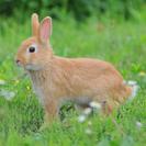 子ウサギあげます! その1