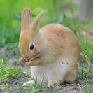 子ウサギあげます! その2