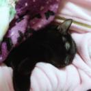 黒猫*男前なジオンくん