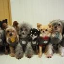 わんちゃんのしつけ 小型犬専用ホテル 飼い方相談 - 北名古屋市