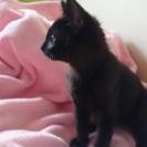 黒猫の女の子里親募集(再)