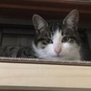 迷い猫探してます!!