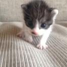 保護した子猫の里親さん募集します。