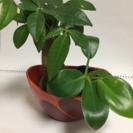 観葉植物の寄植え