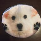 新品 犬 テリア  マルチーズ ポーチ コインケース 小物入れ