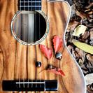 ★ギター女子にもおすすめ★アカシア最高品質アコースティックミニギター【送料無料】の画像