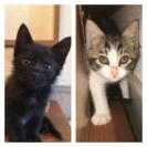 子猫の新しい家族探してます。