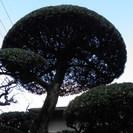庭木の剪定 長乃園