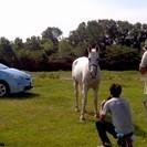 馬の撮影会