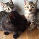 子猫3匹保護しました。生後間もないです