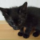 可愛い黒猫の男の子!