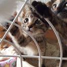2ヶ月位の子猫たち