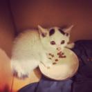 子猫の里親さん募集★マロ猫★@神奈川県厚木市よりの画像