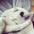 子猫の里親さん募集★マロ猫★@神奈川県厚木市より - 猫