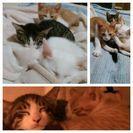 かわいい子猫達です!