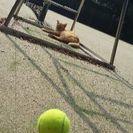【テニス】☆初回割引あり☆大阪☆ヒッティングパートナー・プライベートレッスン - 大阪市