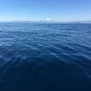相模湾・東京湾限定 フィッシングクラブ 釣り
